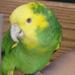 small_avian